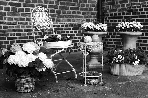 Hydrangeas, Seating Area, Chair, Romantic, Black White