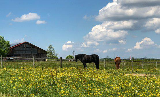 Horses, Meadow, Coupling, Animal, Nature, Animal World