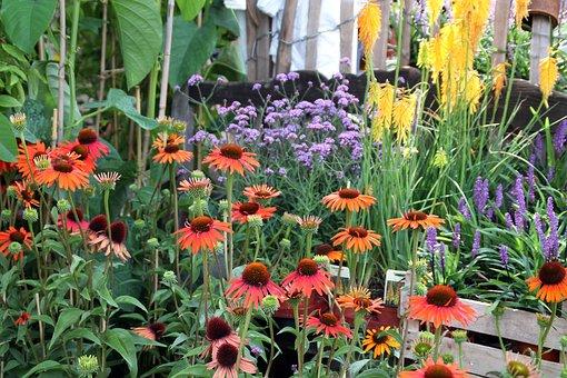 Farmer's Market, Plant Flowers, Echinacea, Coneflower