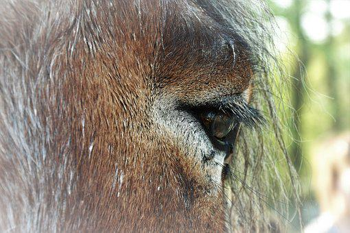 Horse, Eye, Animal, Eyelashes, Moons, Eye Socket