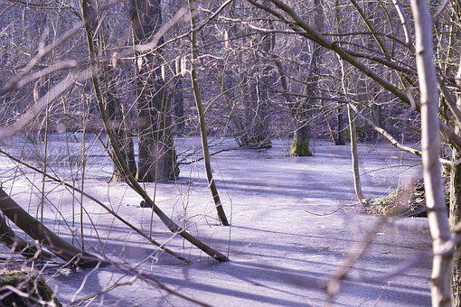 Frozen, Winter Forest, Cold Germany, Winter, Frost, Ice
