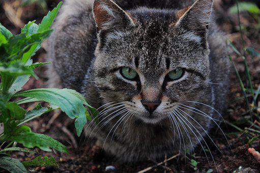 Cat, Cat Pictures, Kitty, Animals, Sweet, Cat Eye, Cute