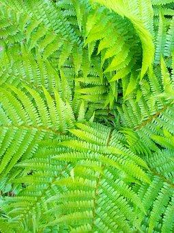 Leaf, Plant, Fern, Nature, Growth