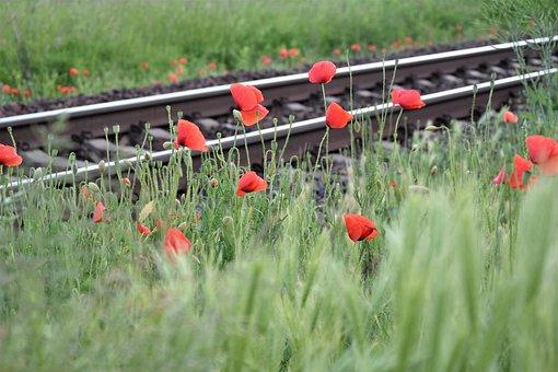 Red Poppy Near Railway, Loving, Romantic, Touching