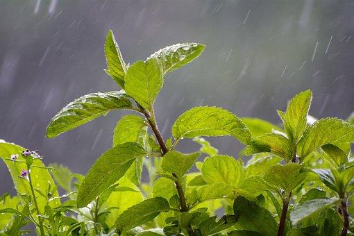 Rain, Drop Of Water, Nature, Green, Raindrop, Drip