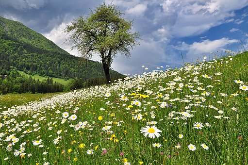 Nature, Landscape, Meadow, Flowers, Spring