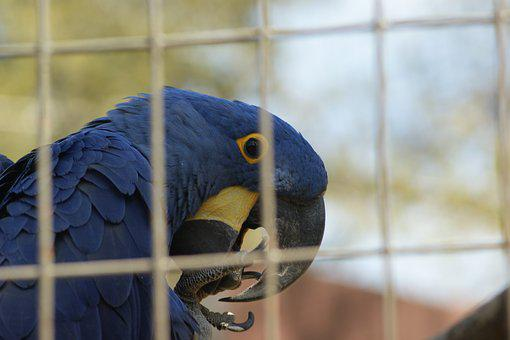 Parrot, Zoo, Bird, Animal, Nature, Tropical, Colorful