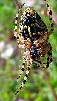 Spider, Spider Web, Close, Cobweb, Macro, Network