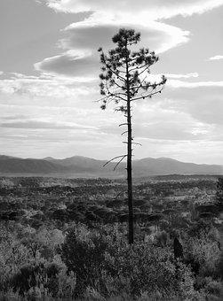 Pine, Plain, Landscape, Mediterranean, Wood, Trees