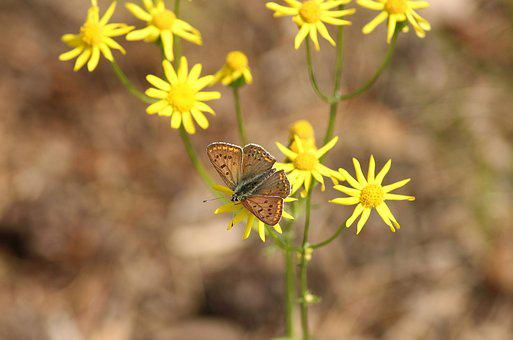 Butterfly, Insect, Plants, Meadow