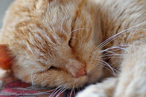 Cat, Sleeping, Tomcat, Redheaded, Rest, Sleep