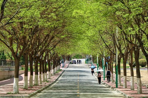 Road, Campus, China, School, Street, Youth