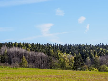 Sipoonkorpi, Finland, Sipoo, National, Park, Nature