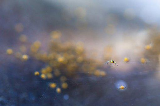 Nature, Background, Light, Landscape, Spider, Abstract