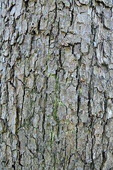 Bark, Structure, Log, Tree Bark, Brown, Tribe, Wood