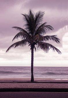 Coconut, Tree, Beach, Sea, Rio, Rio De Janeiro