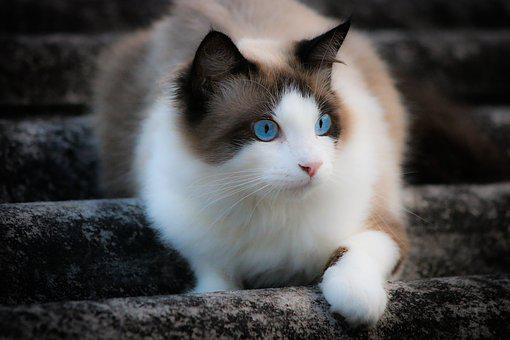Cat, Look, Blue Eyes, Colors, Fur, Roof, White