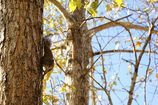 Tree, Squirrel, Wildlife, Nature, Rodent, Animal