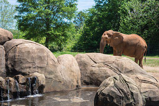 Zoo, Elephant, Animal, Wildlife, Mammal, Africa