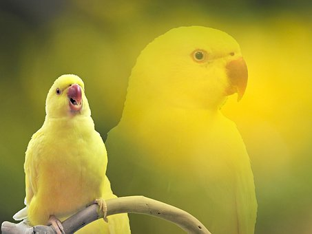 Bird, Parrot, Animal, Feather