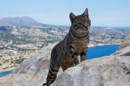 Cat, Sea, Animal, Mieze, Mountain, Attention