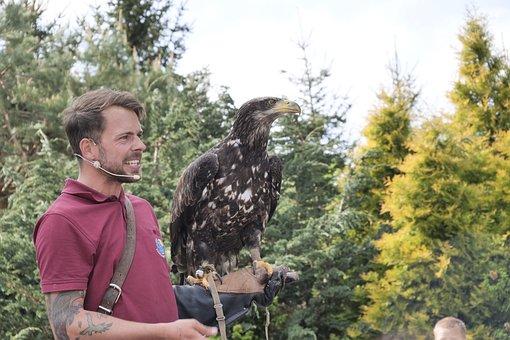 Bald Eagles, Young Bird, Flugshow, Bird Park Marlow