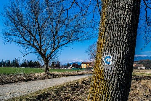 Trees, Branches, Path, Bike, Brand, Bark, Tribe