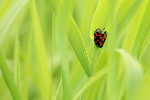 Beetle, Pairing, Insect, Green, Meadow, Spotted, Close