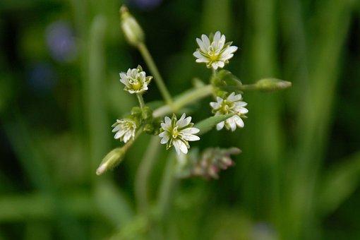 Wild, Growth, Bloom, Berm, Plant, Landscape, Spring
