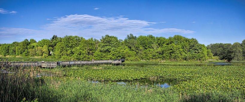 Heinz Wildlife Refuge, Park, Plants, Nature, Birds