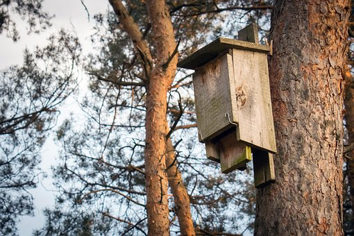 Booth For Birds, Forest, Bird Feeding Tray, Shed