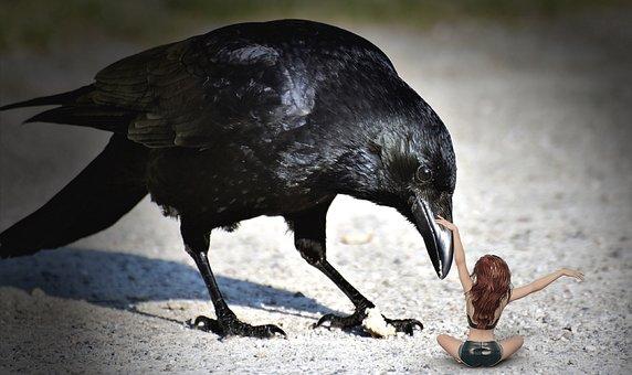 Raven Bird, Raven, Crow, Woman, Curious, Bill