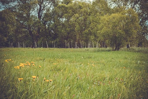 Field, Meadow, Forest, Lawn, Nature, Summer, Fields