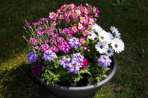 Flower, Pot, Decoration, Plant, Flowerpot, Garden