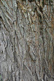Bark, Tree, Texture, Trunk, Large Texture, Forest