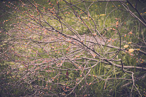 Branch, Tree, Bush, Nature, Plant, Greens, Forest