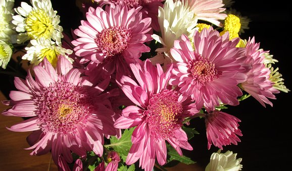 Chrysanthemums, Flowers, Bunch, Plant, Garden