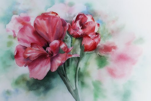 Watercolour, Painting, Art, Geranium, Geraniums Bloom