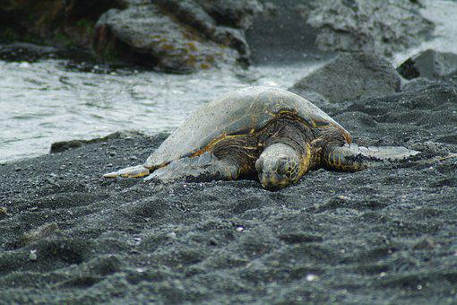Hawaii, Turtle, The Sea Is For, Sea, Summer, Diving