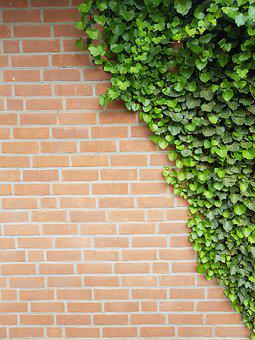 Background, Wall, Ivy, Clinker Bricks, Out, Hauswand