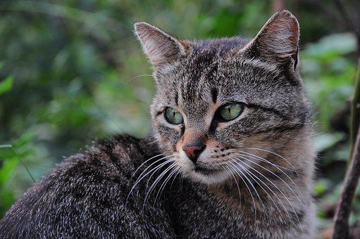 Cat, Cat Pictures, Cat Eye, Kitty, Animals, Nature