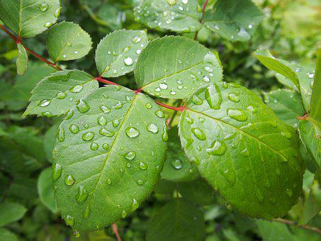 Dew, Leaf, Close Up, Green, Rain, Drop Of Water