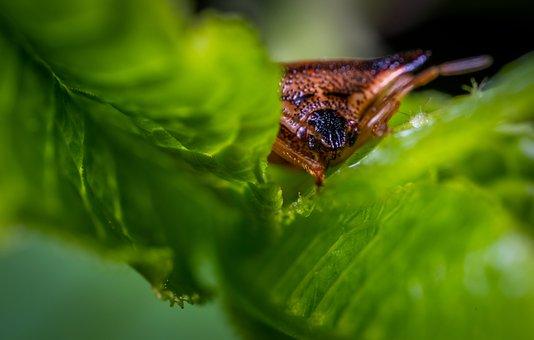 Insect, Macro, Bug, Beetle
