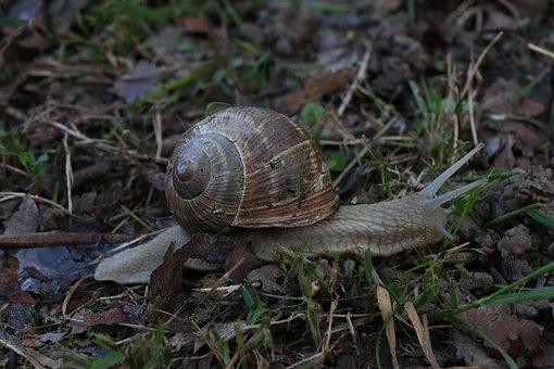 Macro, Prato, Grass, Earth, Field, Garden, Snail