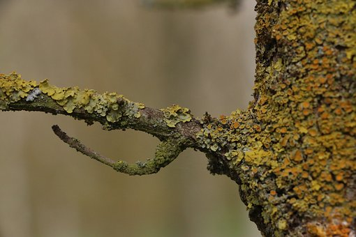 Nature, Macro, Tree, Branch, Flora, Campaign, Trees