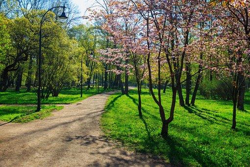Cherry, Bloom, Cherry Blossoms, Nature, Sakura, Youth