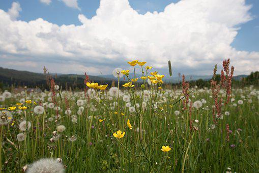 Field, Meadow, Flowers, Cloud, Green, Nature, Plant