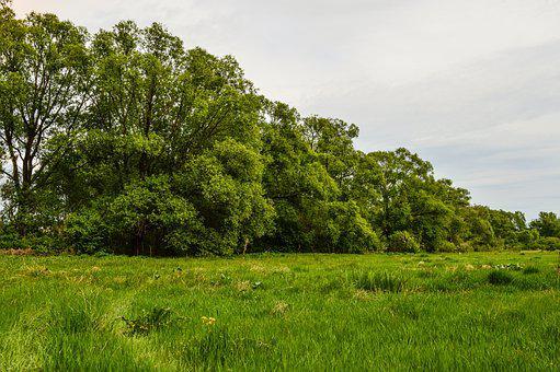 Field, Meadow, Grass, Trees, Nature, Summer, Clouds