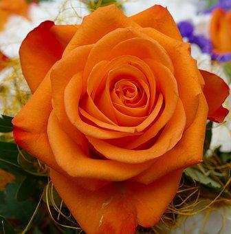 Rose, Orange Blossom