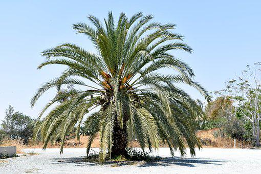 Palma, Holidays, Summer, Palm Trees, Landscape, Nature